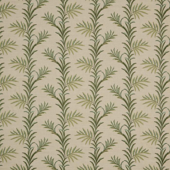 Kala Spruce