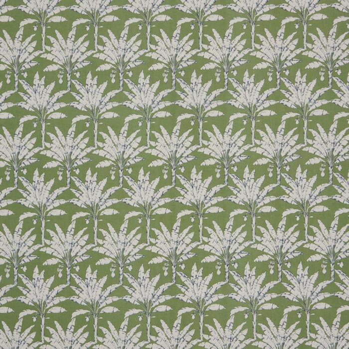 Palm House Spruce